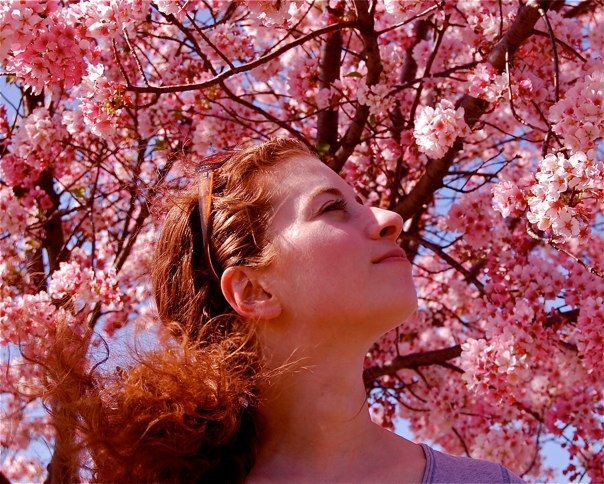 Michelene Cherry Blossoms