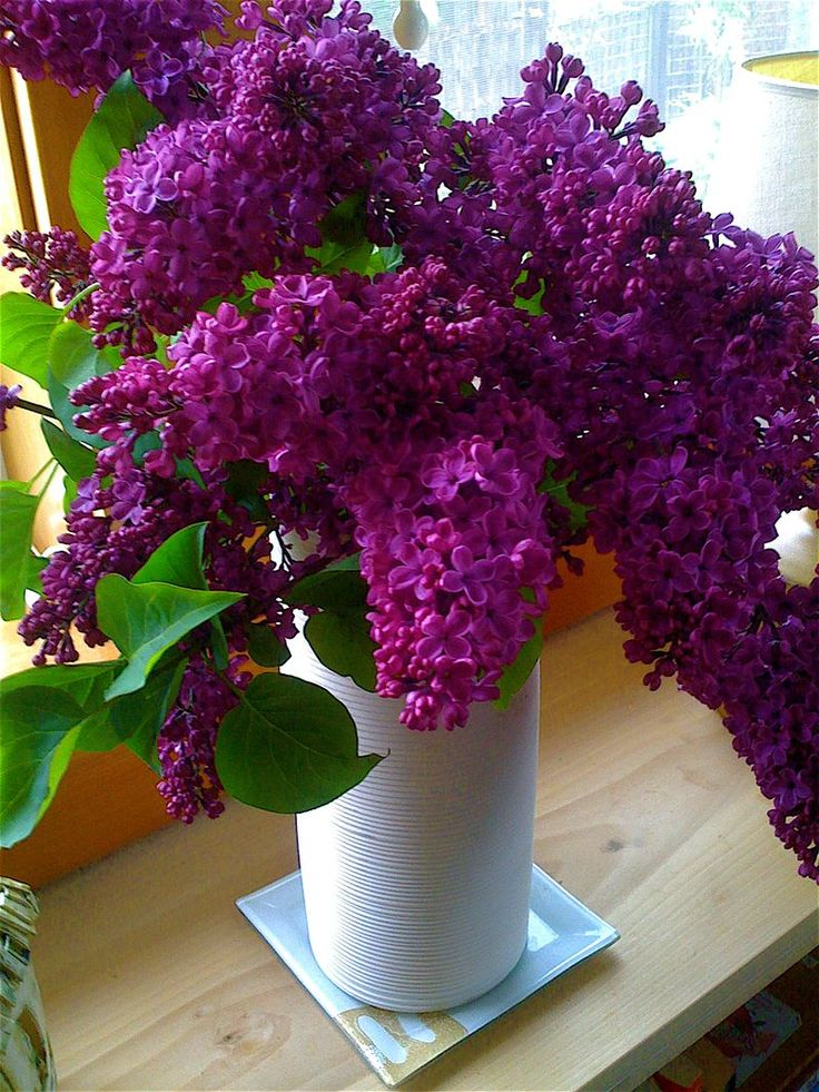 Daleen's Lilacs
