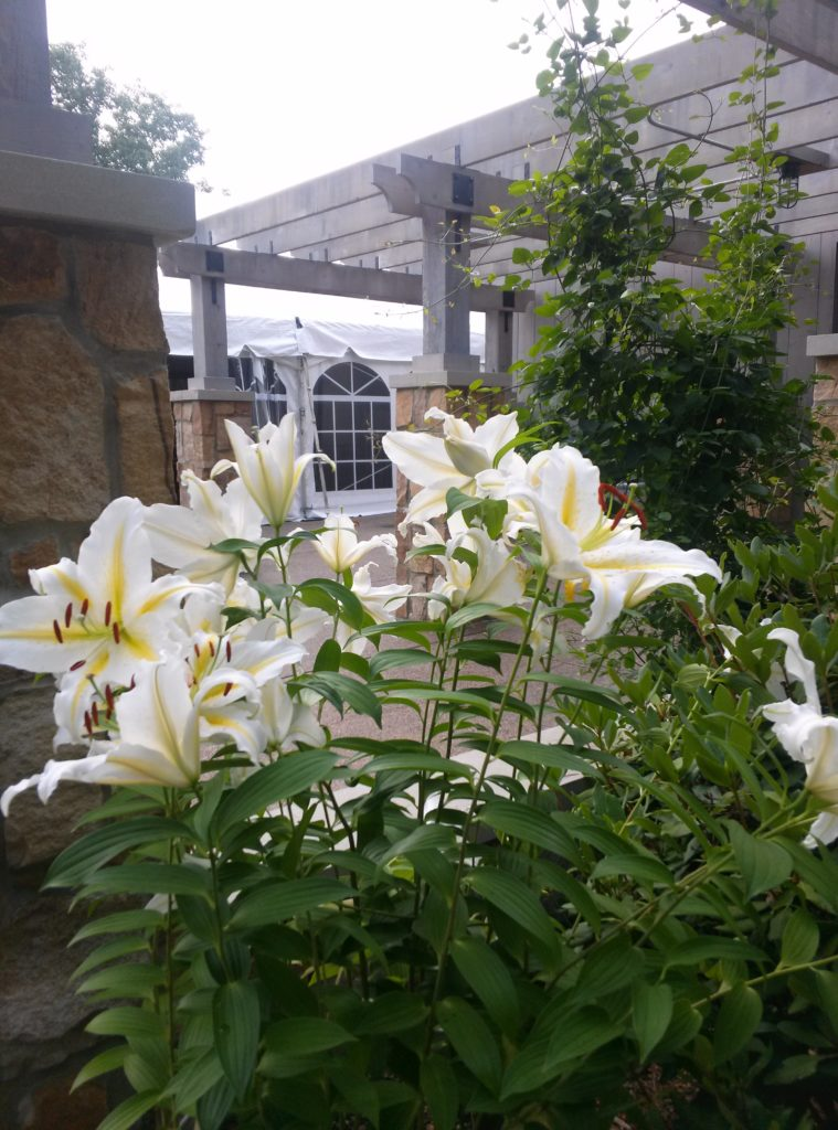 Lillies at the Pittsburgh Botanic Garden