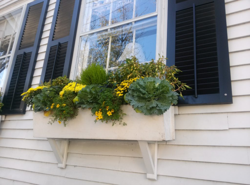 yellow-windowbox