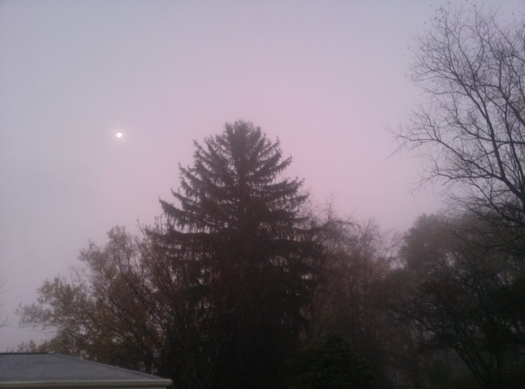 Foggy Morning Beauty